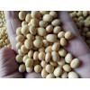 大豆种子批发