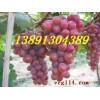 陕西大棚葡萄产地价格,大棚早熟葡萄产地上市价格
